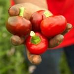 senza dubbio, prodotti ortofrutticoli da agricoltura biologica